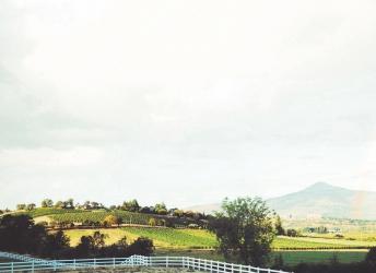 Bodega en España, un proyecto de la tierra